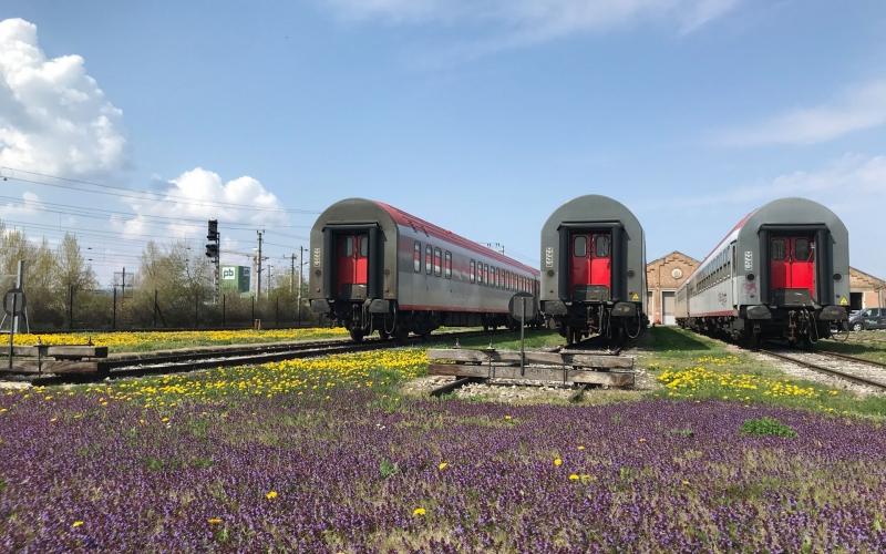 rsi_railservicesinternational_blumenwiese